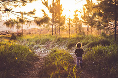 Camino al atardecer. (Pablin79) Tags: landscape forest boy sunset people nature sun light outdoor tree path gold grass child colors evening green wood kid dawn childhood outdoors daylight argentina silhouettes vicente pines goldenhour misiones vini posadas