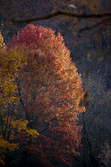 Coming Soon (Mulewings~) Tags: fromarchives tree fall fallingintoautumn fallcolors