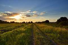 sunset (JoannaRB2009) Tags: sunset sun sunny sky blue clouds meadow nature landscape view path road countryside rural feliksw summer dzkie lodzkie polska poland