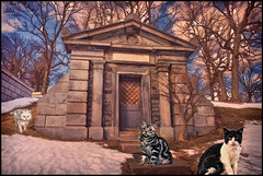 Cats in the Cemetery  Part 20 (jta1950) Tags: winter pet cats pets snow painterly cute monument cemetery grave animal cat feline chat framed tomb adorable gravestone cimetiere