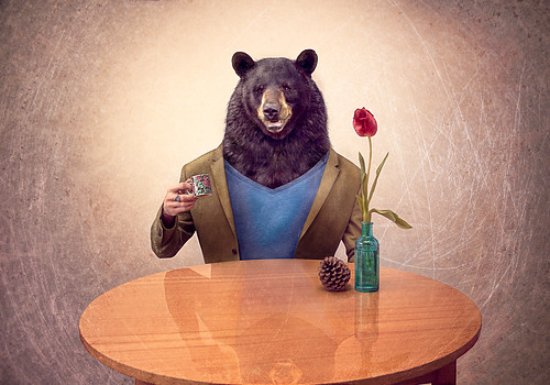 Bear at the table