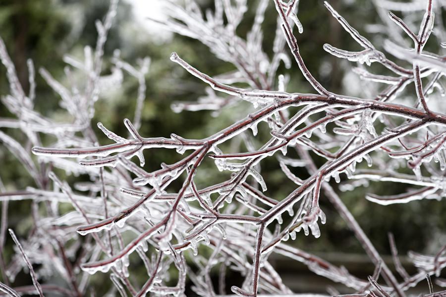 Ice storm 041