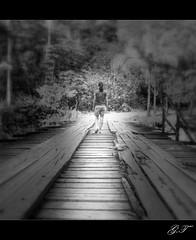 Iluminando caminos / Iluminando caminhos (Gilda Tonello) Tags: pb ponte caminhos texturas velho pontedemadeira rememberthatmomentlevel1 rememberthatmomentlevel2