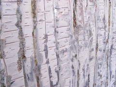 Texture (Dawn Brimicombe) Tags: texture silver painting dawn line wax birch encaustic pigments incise brimicombe aprilartphoto