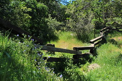 A Welcomed Bend in the Road (socaltoto11) Tags: flowers landscapes wildflowers woodenfences countrylandscapes hartflatcalifornia kerncountycalifornia
