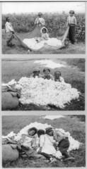 LC-USZ62-36652 AM Cotton (Children's Bureau Centennial) Tags: sleeping black children negro northcarolina cotton africanamerican libraryofcongress 1914 weighing childlabor hine cottonpickers africanamericanchildren lewiswickeshine childlaborrural lcusz6236652