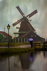 Windmill at Zaanse Schans (Cat Girl 007) Tags: old holland texture water netherlands windmill dutch architecture reflections landscape wooden europe gloomy antique 17thcentury rustic scenic rainy historical picturesque zaanseschans oldfashioned vintagefindings purpleumbrella