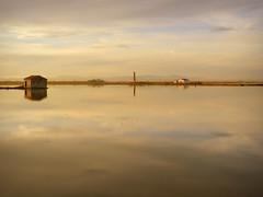 Flotando sobre un espejo... (.Bambo.) Tags: water valencia agua arrozal plantación laalbufera