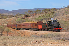NM25 - The Afghan Express (Wings and Wheels) Tags: railroad heritage train bush south volunteers rail railway australia historic steam ranges pichi outback locomotive southaustralia flinders preservation steamtrain quorn richi flindersranges prr pichirichi pichirichirailway railwaypreservation