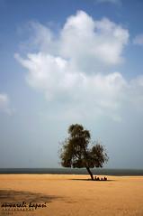 Chopattty Beach (Anwar Kapasi) Tags: tree clouds nikon maharashtra mumbai lonelytree chowpatty marinedrive chowpattybeach mumbaicity 18105mm nikond90 akapasi anwaralikapasi