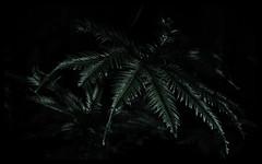 Ferns on the forest floor (kylieardill) Tags: ferm fineartphotography shadows light sunlight dappledlight forest bluemountains newsouthwales australia