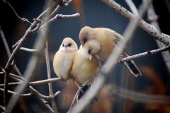 The Birds (CMF1983) Tags: birds bird flickrsbest wildlife nature animal twop tamron d3300 nikon uk hampshire zoo marwell outdoor