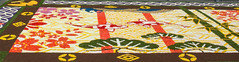 2016 flower carpet detail. (Azariel01) Tags: 2016 bruxelles brussels belgique belgie belgium japan friendship amiti tapisdefleur flowercarpet begonia flowers fleurs tapis carpet motifs 150years 150ans diplomatie pays countries bloementapijt