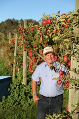 IMG_5939 (mavnjess) Tags: 28 may 2016 harvey edward giblett newton orchards manjimup harveygiblett newtonorchards cripps pink lady crippspinklady popaharv eating apple crunch crunchy biting apples pinklady pinkladyapple harv gibbo orchard appleorchard orchardist