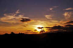 Single tree outlined (Sundornvic) Tags: shropshire sunset sun shine clouds sky pentaxart skyscenes tree silhouette fields