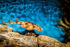 Vasca 2 - Oceanario Lisbona (antoniosimula) Tags: oceanario lisbon lisbona lisboa portogallo portugal area expo fish flora fauna nikon d3200 35mm 70300 tamaron ocean species pacific atlantic indian