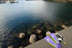 20160903-DS7_3265.jpg (d3_plus) Tags:  a05 d700 street fish port apnea zoomlense   watersports sky    nikon  flower   tamronspaf1735mmf284dildaspherical  nikond700 touring scenery   nikon1 wideangle nature izu sea  minamiizu underwater superwideangle skindiving japan   tamronspaf1735mmf284dildasphericalif tamronspaf1735mmf284dild nikkor tamronspaf1735mmf284  drive   marinesports snorkeling tamron1735   diving   fishingport   shizuoka  bloom   plant