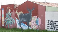 _DSC6045 (Mario C Bucci) Tags: saida fotografia pacheco paulo tellis mario bucci hugo shiraga fabio sideny roland grafites volu ii