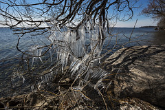 Tangled Chandelier (Matt Molloy) Tags: mattmolloy photography ice icicles tree branches rocks water neat nature tangled chandelier lakeontario bath ontario canada landscape lovelife