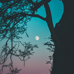 Twilight Moonrise (Adam_Marshall) Tags: autumn blue minimalism landscape sunset nature twilight stereocolours outdoors moon trees telephoto sky adam marshall adammarshall moonrise gradient shadow dark atmospheric soft silhouette canon eos70d 70200mmf40 countryside cambridgeshire holme