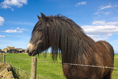 _DSC0900 (Ryd3rsPhotographs) Tags: whitby abbey photo building noob beginner amature horse grave yard goth gothic scenery grass scenic landscape long exposure