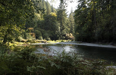 Afternoon on the Litte No. Santiam River (Joan Gray) Tags: northfork littlenorthsantiamriver september