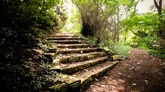 lake katherine. 2016 (timp37) Tags: stairs path lake katherine illinois july 2016 summer palos