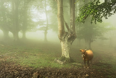 A world for a tale (alonsodr) Tags: alonsodaz alonso alonsodr sony alpha a7sii ilce7sm2 alpha7sii carlzeiss cz1635mm gnd8 filter vizcaya bizkaia pasvasco euskadi gorbea hayedos bosque forest landscape paisaje parquenatural