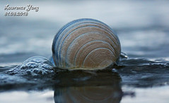 Seashell (Lawrence lolly pop Yang) Tags: beach seashells canon eos shell orewa eos650d