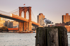 NY bridge (littletower.photo - www.giuseppetorretta.it) Tags: new york bridge brooklyn nikon 2470mm d90