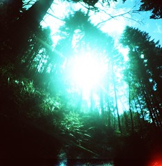 Laurelindrenan (liquidnight) Tags: travel blue trees light sky plants sunlight green film nature sunshine stone oregon analog forest mediumformat lost lomo xpro lomography crossprocessed woods flora bright kodak hiking hill radiance toycamera dream treetops adventure lightleak diana journey valley ethereal mysterious vegetation dreamy verdant analogue ferns dianaf vignetting ektachrome radiant tolkien wander multnomahfalls steep jrrtolkien middleearth columbiarivergorge lrien sindarin multnomahcounty e100sw lothlrien laurelindrenan