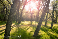 Naturescapes-7 (Elevated Media Group) Tags: california ca wood sunset summer sun lake nature grass set canon silver studio landscape spring media horizon group flare hesperia elevated dennis silverwood t3i dns 600d arriaza