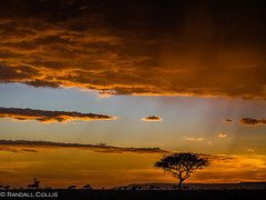 Kenya2006-4 (Dalo2013) Tags: africa travel sunset sunrise kenya wildlife safari masaimara masamara
