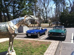1972 Triumph TR6 and 1976 Spitfire (Taylor Player) Tags: new blue cambridge england green car pub automobile antique connecticut painted ct convertible pony british ponies tahiti granby brew emerald 1500 leyland roadster lbc barkhamsted barkhamstead