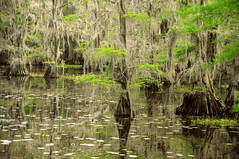 Moonglow Lodge Caddo Lake State Park Uncertain Texas Cypress Trees Swamp Spanish Moss DSC_0716 (Dallas Photoworks) Tags: moonglow lodge uncertain texas caddo lake state park cypress swamp trees spanish moss river forest