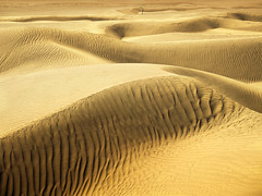 Gold! Ive found Gold! (parkerbernd) Tags: africa travel light shadow vacation tree texture sahara yellow lumix gold golden fantastic sand desert offroad wind dunes north structure panasonic explore morocco valley tiny maroc zagora marokko tons draa gx1 draatal mhamid