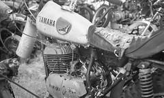 Motorcycle Junkyard (bcgreeneiv) Tags: blackandwhite bw film graveyard olympus xp2 motorcycle yamaha junkyard wreck scrap ilford rt2 om2n