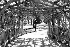 Central Park (ElianePires) Tags: park nyc newyorkcity blackandwhite ny newyork centralpark pretoebranco d40