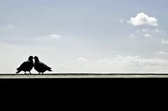 Pigeons Love (Serge Freeman) Tags: birds pigeons silhouettes romantic minimalistic
