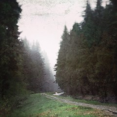 Lillooet Road (Orbittrap) Tags: road texture nature fog woods bc northvancouver lynncanyon iphone iphone5 uploaded:by=flickrmobile flickriosapp:filter=nofilter