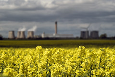 Drax Power Station (Bieomax) Tags: uk flowers field station yellow power yorkshire powerstation brassica drax rapeseed napus