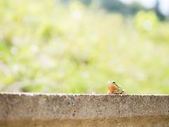 PhoTones Works #2725 (TAKUMA KIMURA) Tags: nature landscape scenery frog   omd kimura     takuma   em5 photones