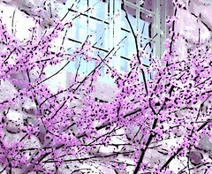 Redbud Tree and Green Window (Digital Woodcut) (randubnick) Tags: art photography photograph painter redbudtrees bradleypalmerstatepark topsfieldma digitalwoodcut willowdaleestates painter12