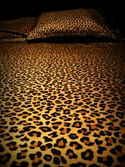New Sheets!!! (carrie120505) Tags: bed leopardprint bedding