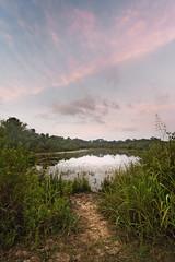 the fishing spot (Mr. Greenjeans) Tags: morning water landscape pond weeds louisiana path canonefs1022mmf3545usm mrgreenjeans gaylon blackwaterconservationarea gaylonkeeling