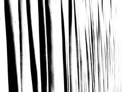 Murs drap (lausend) Tags: light urban blackandwhite muro luz wall architecture modern concrete pared photography licht photo arquitectura foto photographie image noiretblanc lumire wand picture moderne panasonic stadt architektur urbano fotografia bild mur architettura moderno luce imagen urbain immagine hormigon bton enblancoynegro inbiancoenero calcestruzzo gandrille tz10 schwarzundweib lausend