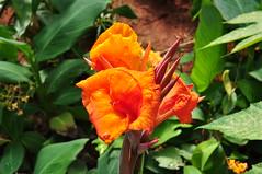 11 (Somnath Banik) Tags: bangalore nikon1855mm nikond5000