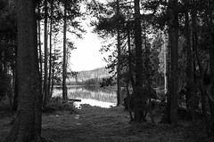 sierrasbw-4772 (VLinkphoto) Tags: sierra nevadas sierranevada mountains lake goldlake gooselake camping outdoor adventure hike swimming nature trees water evergreen pine fir tent plumascounty plumasnationalforest summer vacation canon6d rokinon samyang bower rokinon35mmf14