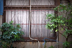(twinleaves) Tags: d5300 tokyo minowa lattice window pipe green plant cable
