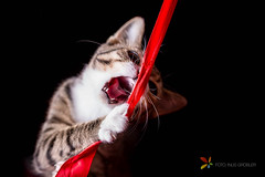 Kitten Catching Lint Midair (grobler.inus) Tags: red pet playing cute animal cat fur carpet photography kitten feline irene lint playful fotoinusgrobler